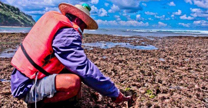 dia sedang membelah-belah karang menggunakan kapaknya untuk mencari cacing.
