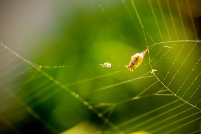 santapan anak laba-laba itu lalat. nyammm!