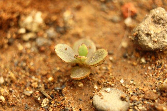 tanaman ini nyari nggak bisa dilihat *lebay*