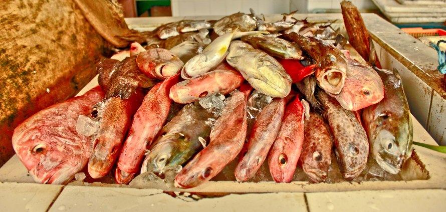 Kasihan ya melihat ikan-ikan ini. Mereka pada masuk surga atau neraka sih?