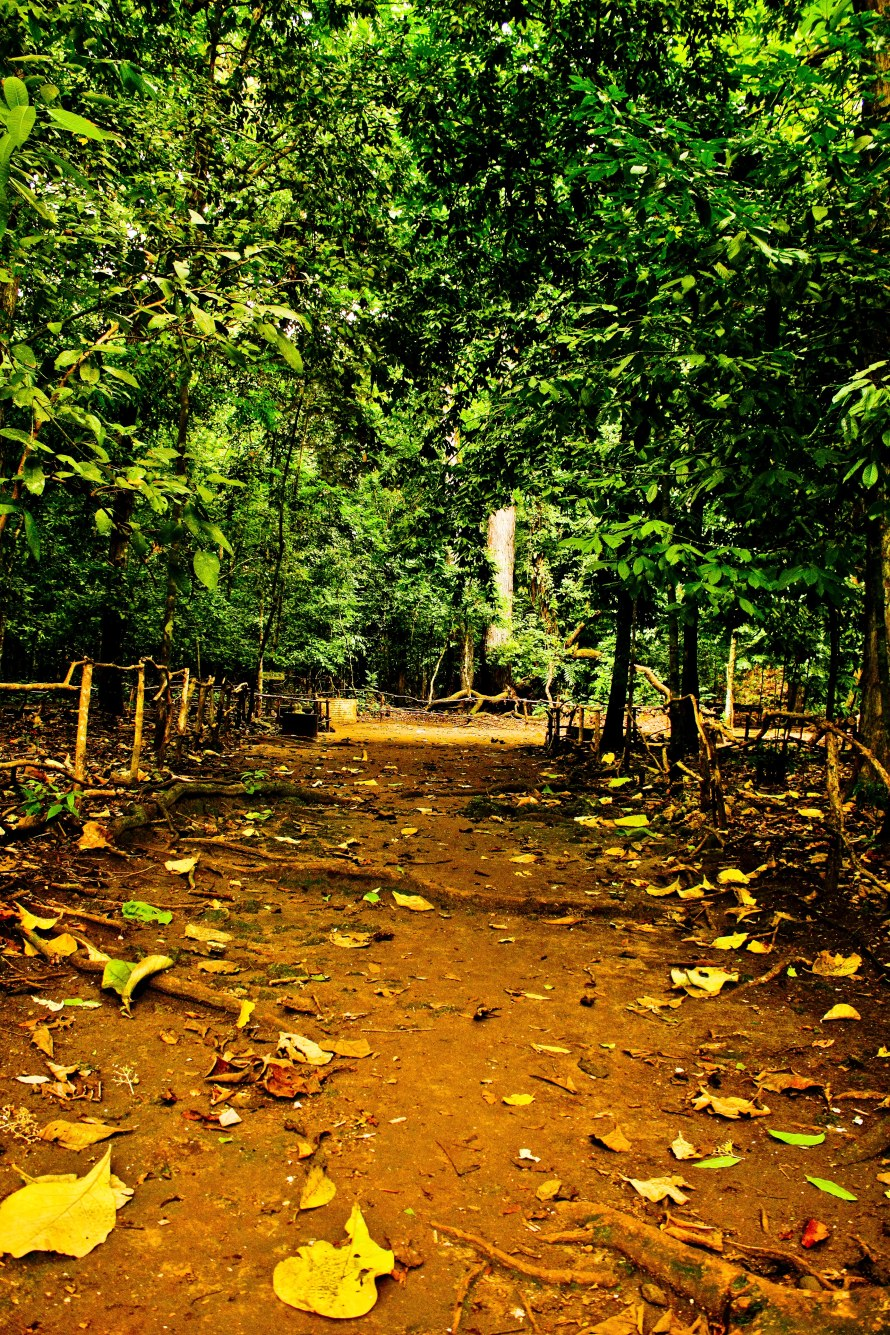 Jalanan menuju Batu Kalde. Suara burung, tonggeret dan udara hutan menemani saya dan @dwiyuniartid.