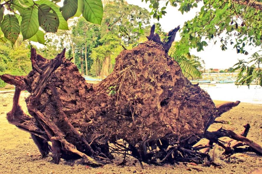Pohon raksasa tumbang dibiarkan tumbang dan busuk secara alamiah. Saya suka konsep alamiahnya, tapi bisa kan dirapihkan supaya tidak merusak pemandangan.