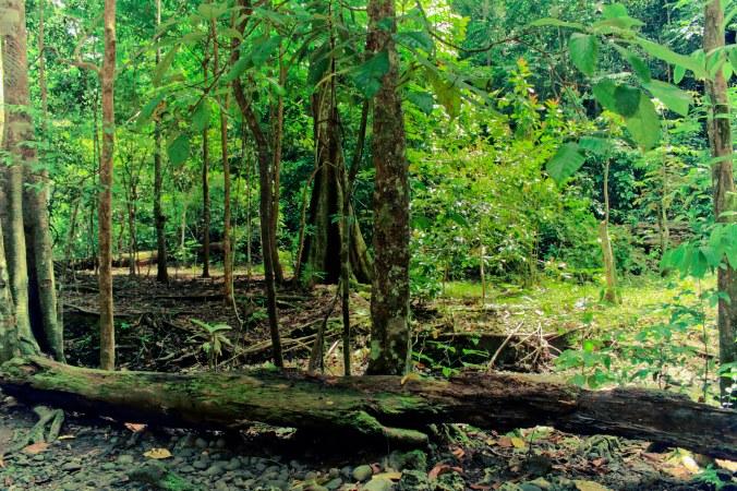 Banyak pohon besar tumbang dan dibiarkan lapuk. Duduk duduk di sini sambil ngebir atau ngeganja kali enak ya.