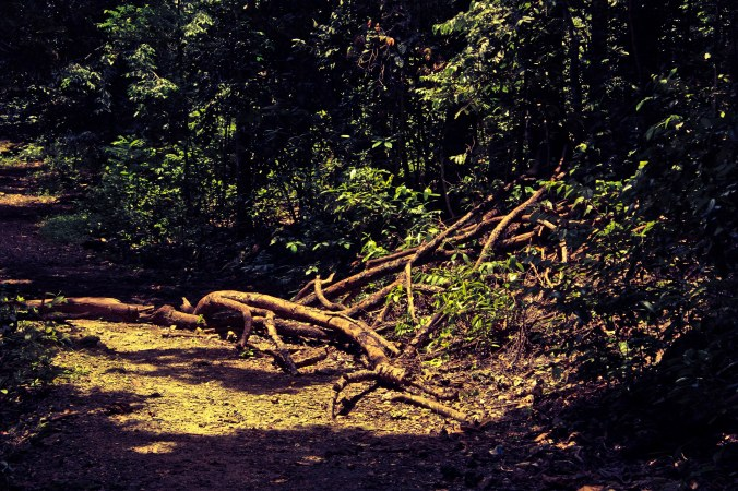 Jalan setapak di tengah hutan menuju Gua Parat. Sepanjang perjalanan saya dihibur segala jenis penghuni hutan.