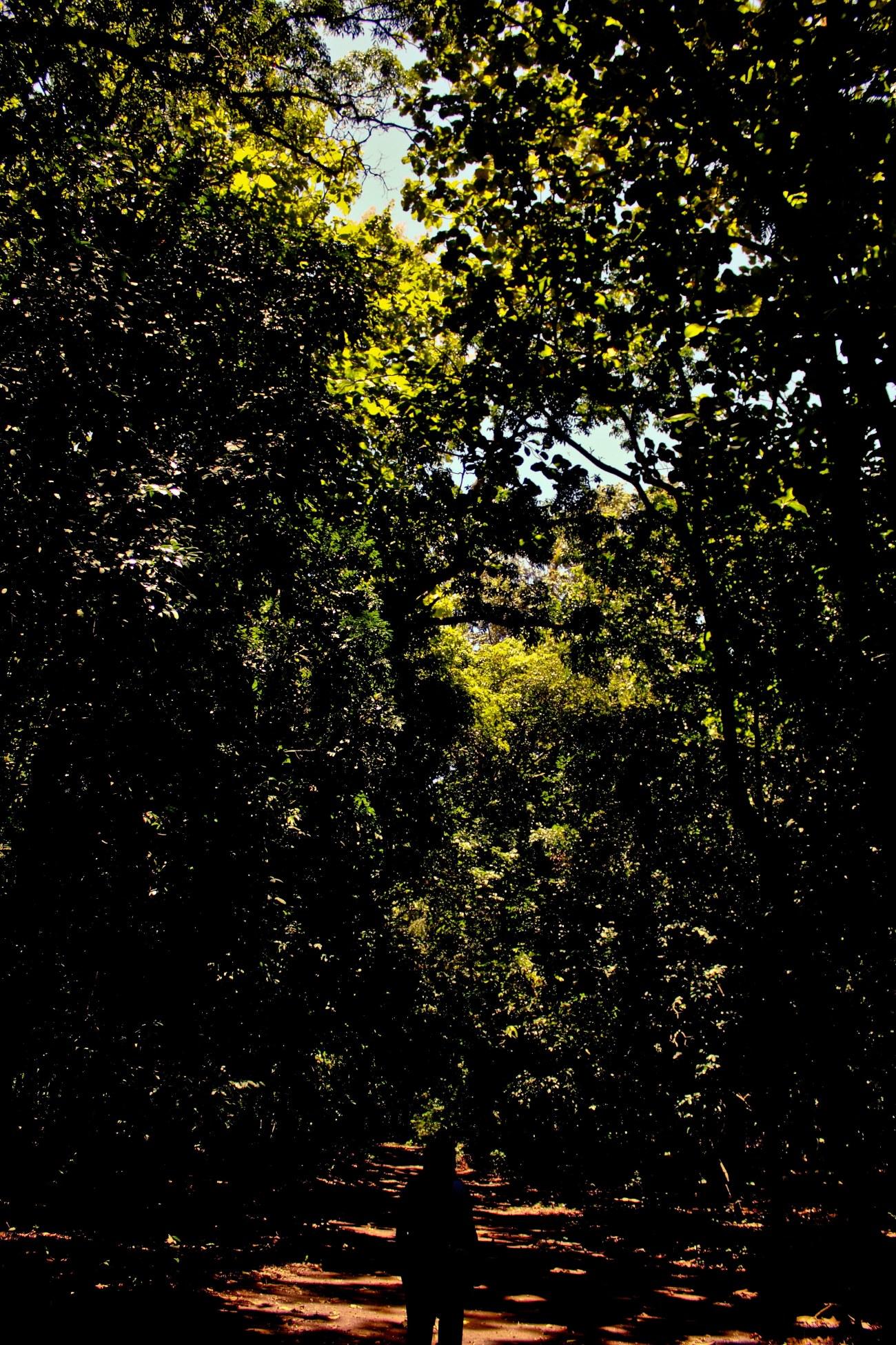 Masuk ke dalam hutan.