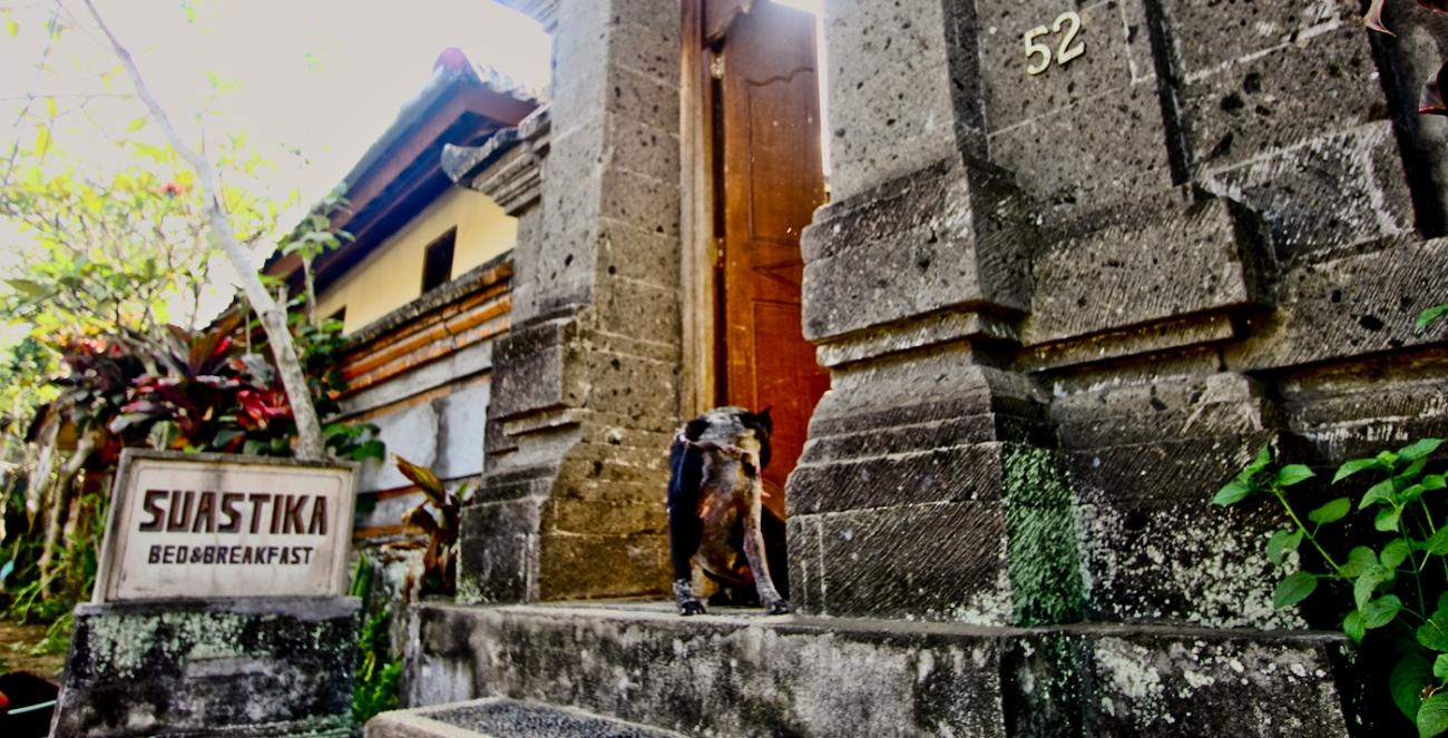 selamat datang di suastika, kata sang anjing dengan bahasa gang gang gong gong.  anjingnya baik kok.