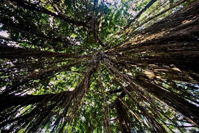 Akar pohon untuk gelantungan. Siapa mau?