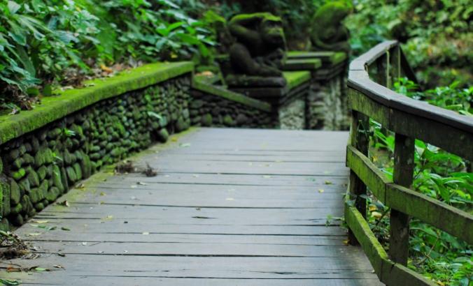 Masuk ke Hutan Monyet ini emang berasa ada di dimensi lain. Penuh lumut, penuh monyet, suara sungai dan pohon-pohon besar.