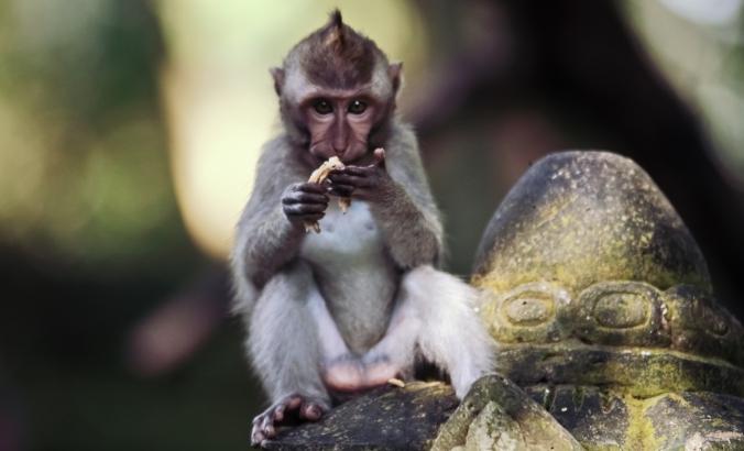 Manusia emang norak. Lihat monyet aja girangnya setengah mampus. Hiuh! Monyet aja sampe bingung.