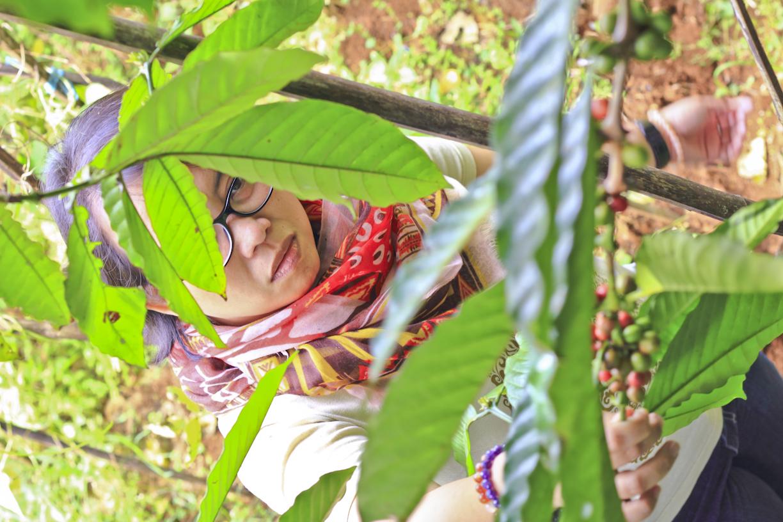 Dia ikutan panen, tapi nggak bisa manjat pohon kopi.