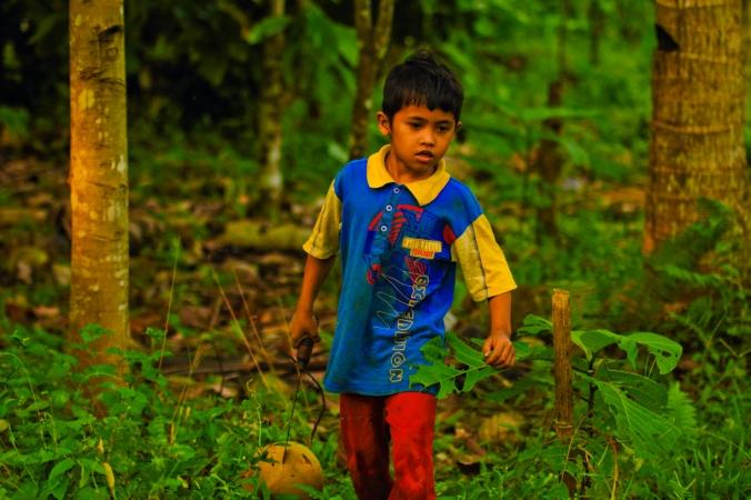 Anak umur enam tahun sudah bawa-bawa golok dan mengumpulkan kelapa untuk dijual seribu dua biji.