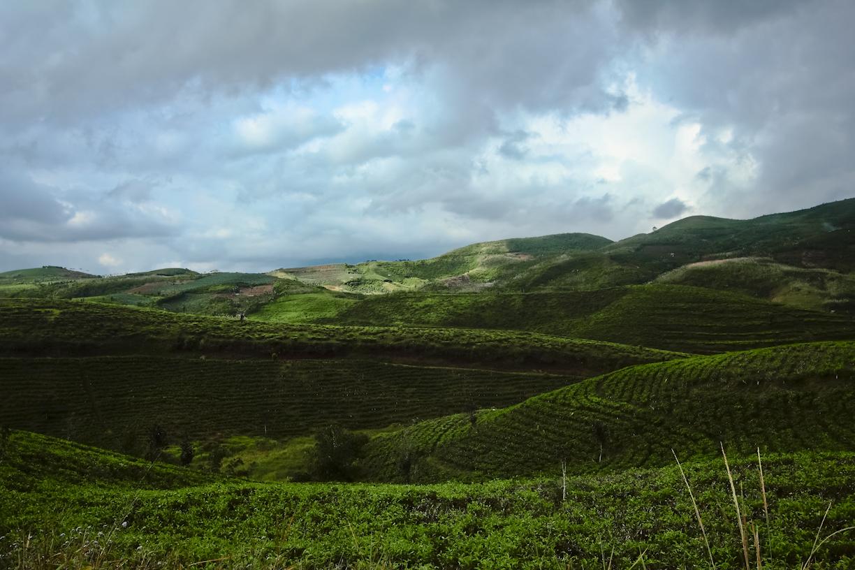 pengen juga sih punya perkebunan teh seluas ini. ada lho yang dijual. mau beli? 500 hektar.