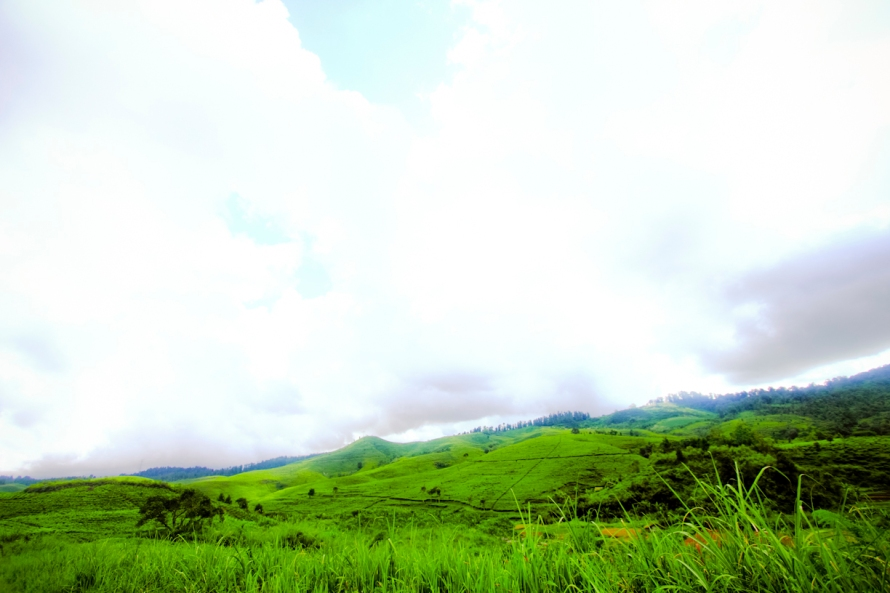 kabut di atas perkebunan teh mulai turun. kalau sudah begini, hayuk kita menikmati jagung bakar atau hmm... berkenalan dengan anak kepala desa. halah!