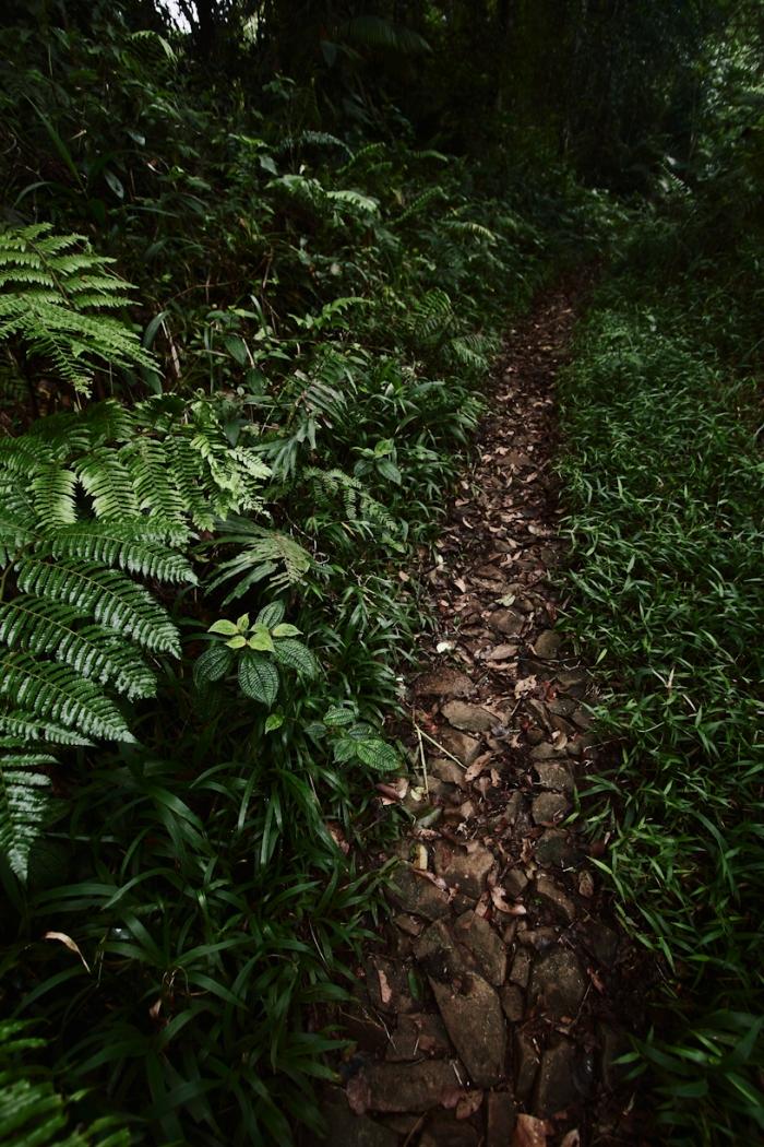 Sisa jalanan di tengah hutan. Aspalnya sudah mengelupas dan tinggalah jalanan setapak berbatu.
