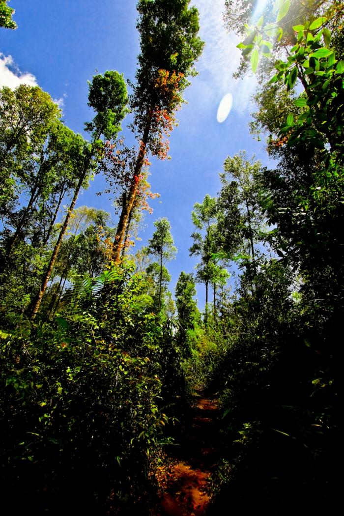 Jalanan setapak tanah merah di pintu hutan. Pohonnya jarang karena ditebang dan dijual pemerintahan.