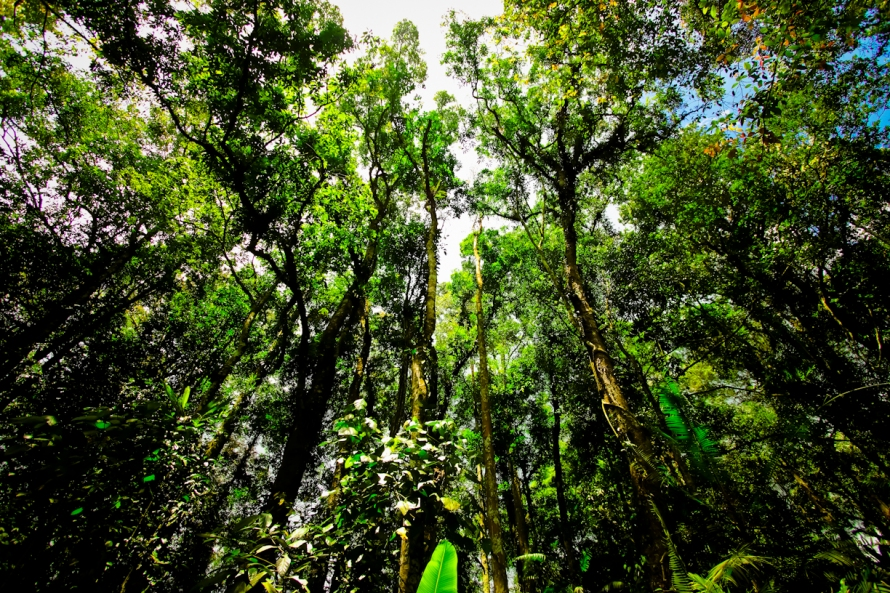 Sisi kiri jalan berupa hutan cagar alam.