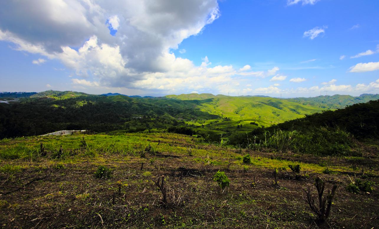 Sebagian bukit di Puncak Bungah mulai  dibersihkan dari pohon liar. Para petani siap menggarap lahan di Puncak Bungah.