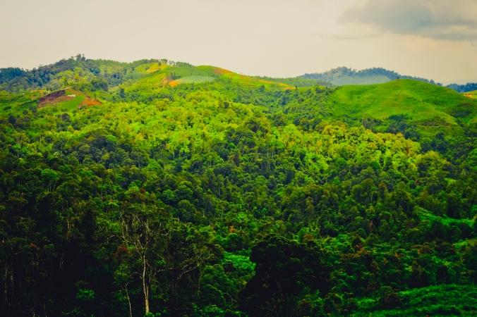 Hutan di seberang Puncak Bungah sekarang dibuka menjadi lahan pertanian di beberapa titik. Di atas hutan itu saya biasa melihat ELANG terbang sangat rendah dan sekarang elangnya mana ya. Sedih rasanya.