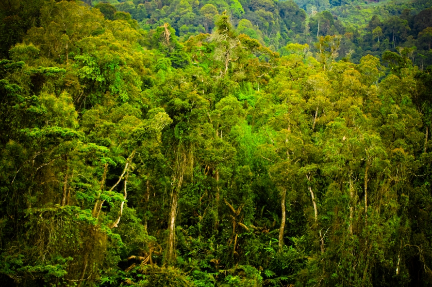 Semoga hutan ini tetap apa adanya. Kalau sampai habis, tamatlah riwayat penduduk di sekitarnya. Hutan ini sumber air dan sumber kehidupan.