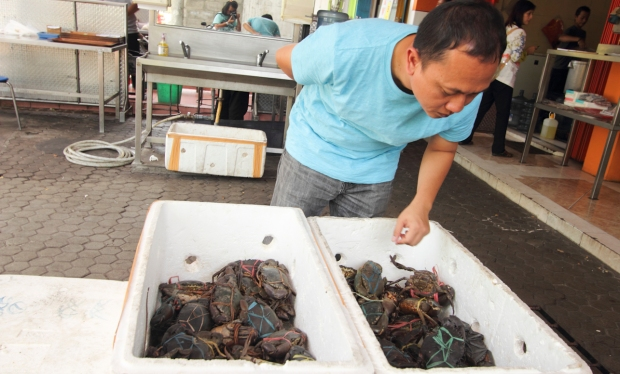 Pilih kepiting yang masih galak.