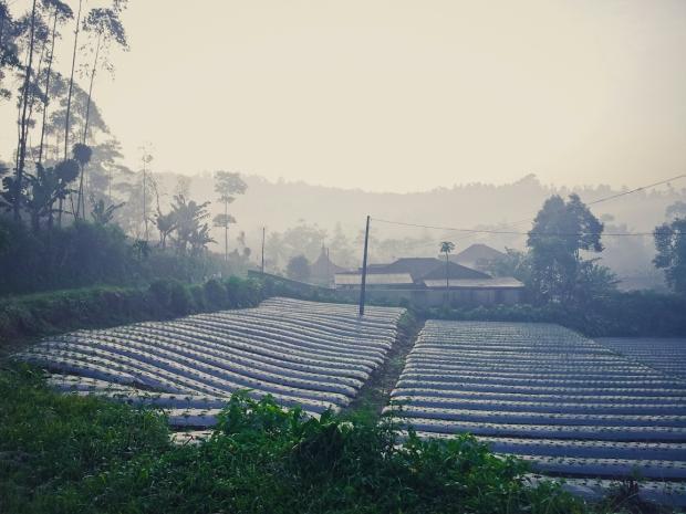 Pertanian di kaki Gunung Malang.