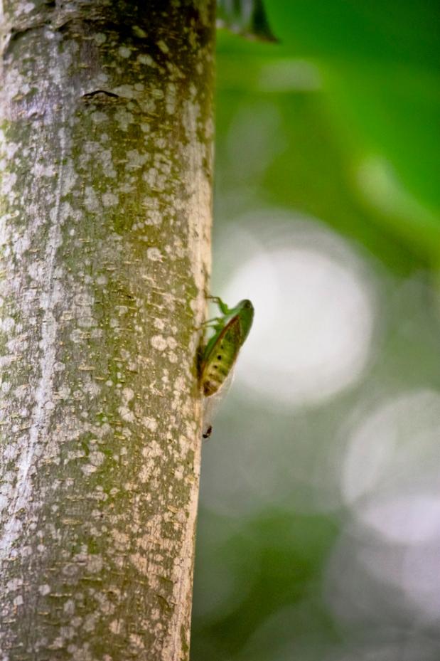 A cicada shell; it sang itself     utterly away. Haiku-Matsuo Basho.