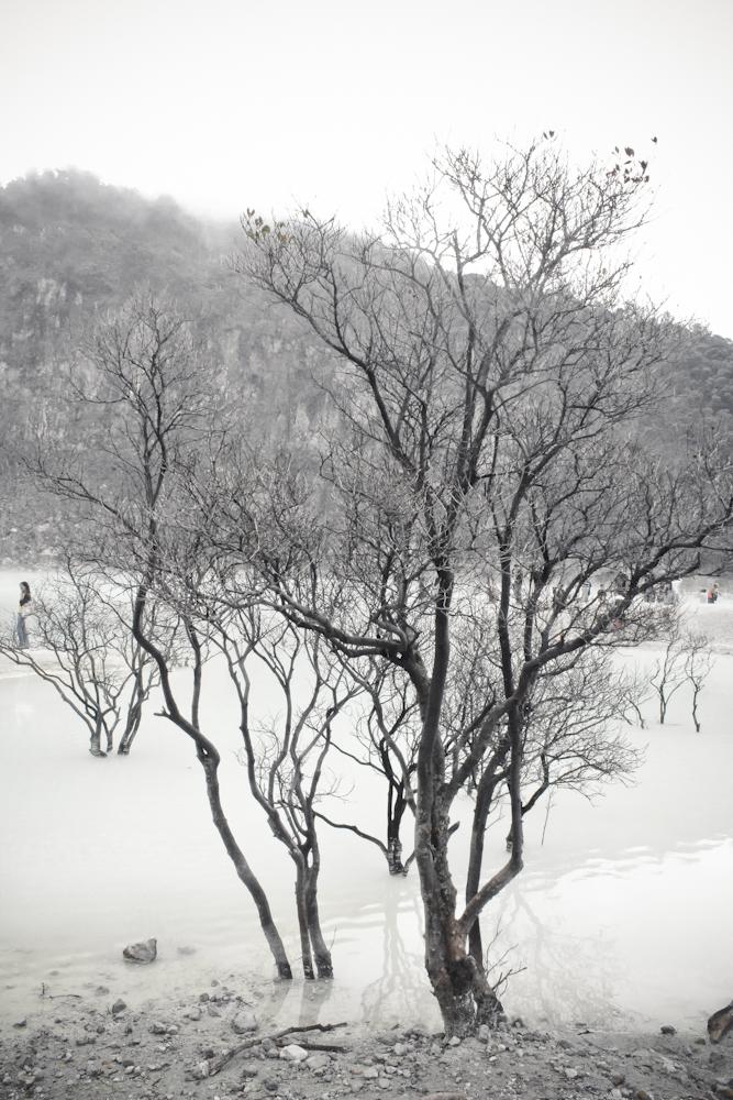 Karena cinta, pohon ini tetap hidup.