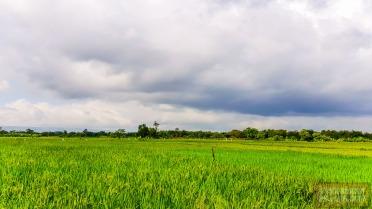 Biasanya dulu kalau sudah mendung tinggal menunggu hujan dan lelarian sampai puas di pematang sawah sambil hujan-hujanan