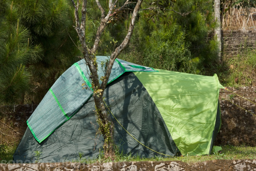 Pine Forest Camping Ground12