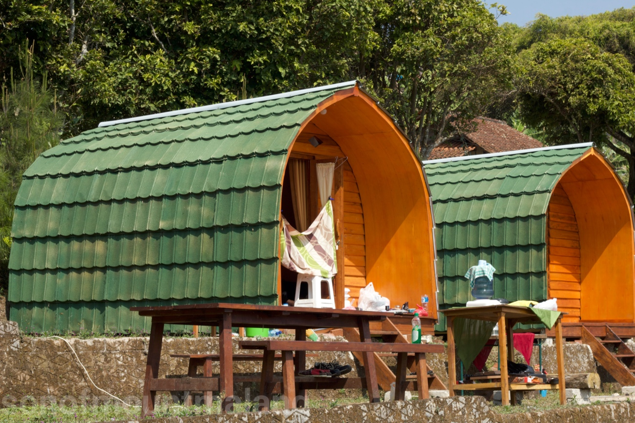 Pine Forest Camping Ground14