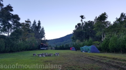 Pine Forest Camping Ground8