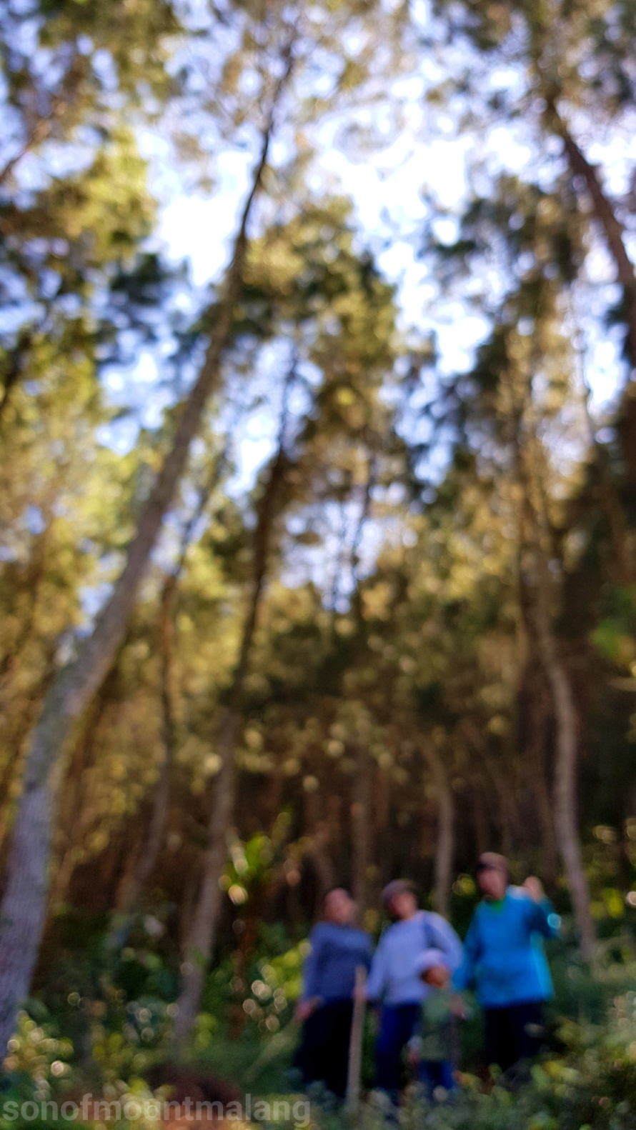 Hutan Pinus Suntenjaya1