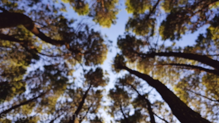 Hutan Pinus Suntenjaya5