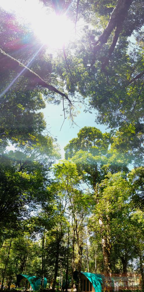 HEJO FORESTsonofmountmalang.com-16
