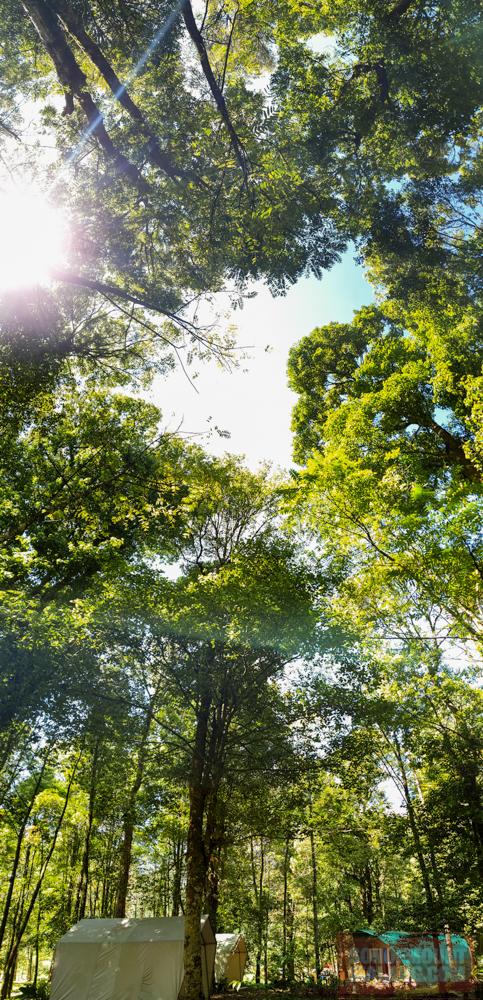HEJO FORESTsonofmountmalang.com-21