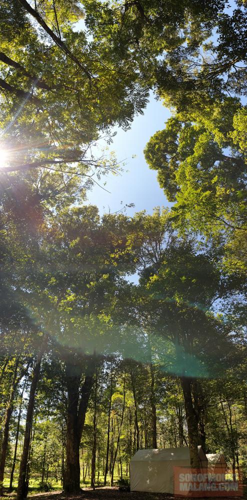 HEJO FORESTsonofmountmalang.com-27