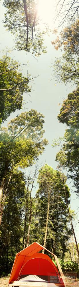 HEJO FORESTsonofmountmalang.com-34