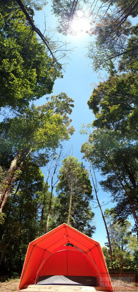 HEJO FORESTsonofmountmalang.com-35