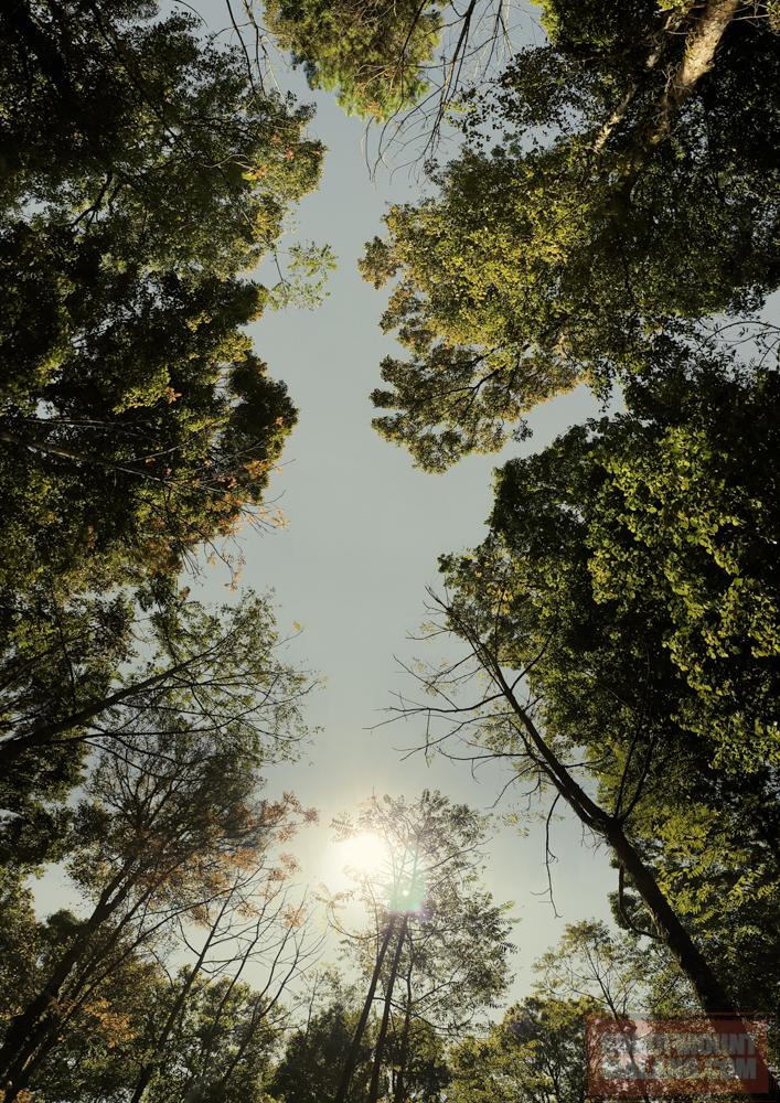 HEJO FORESTsonofmountmalang.com-36