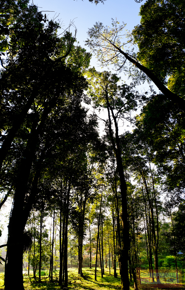 HEJO FORESTsonofmountmalang.com-4