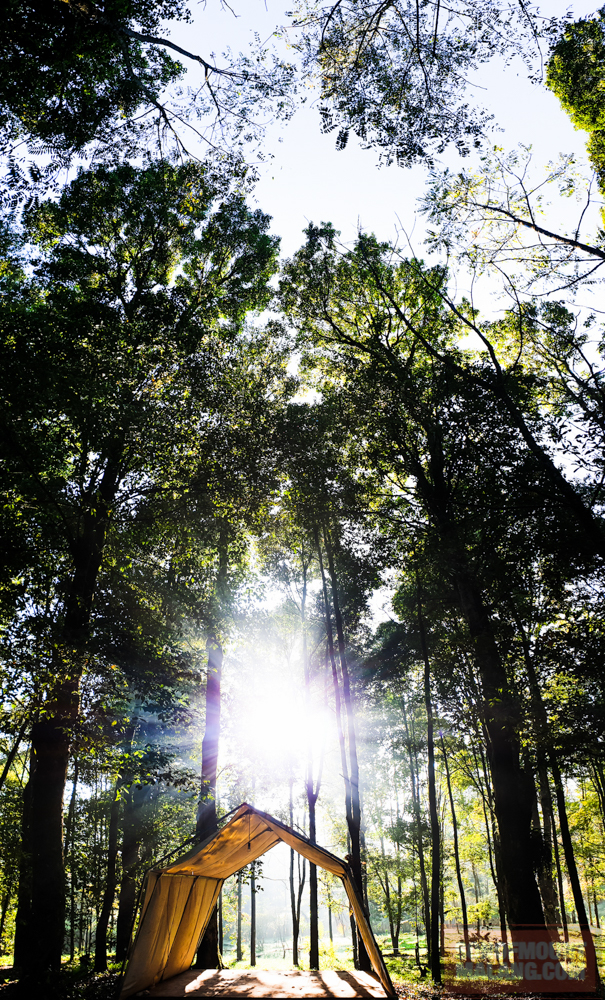 HEJO FORESTsonofmountmalang.com-7